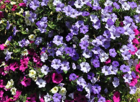 Garten Balkon Www Blumen Weilrod De